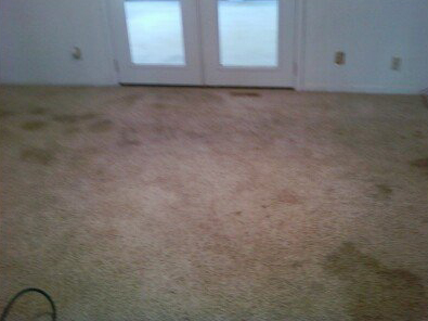This carpet is in pretty bad shape! Ew!